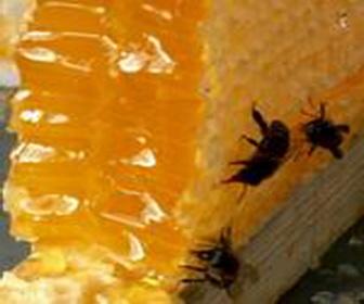 Мед пчелиный