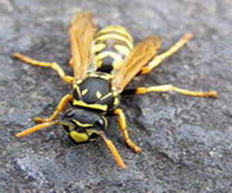 Помощь при укусах насекомых