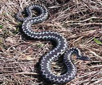 Змеиные укусы и дети