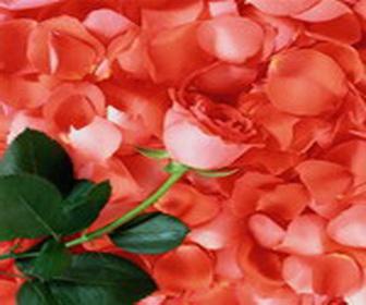 Полезные варенье, желе, компоты. Розы