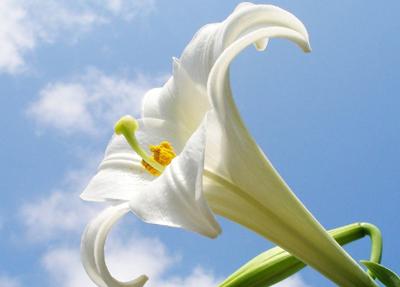 цветы аллергия насморк