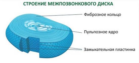 диск межпозвоночный
