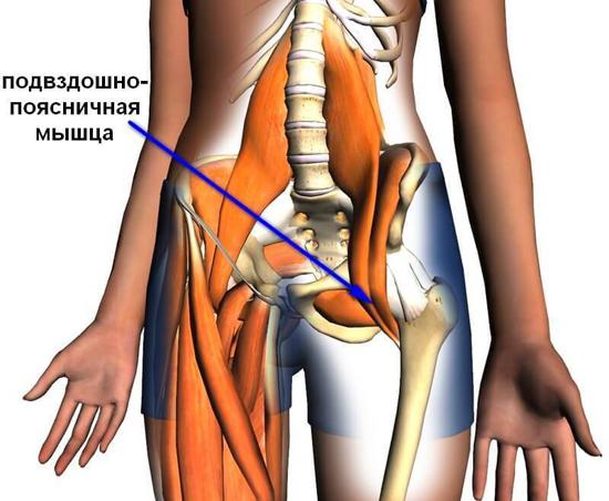 Мышцы и кости таза обеспечивают устойчивость походки.